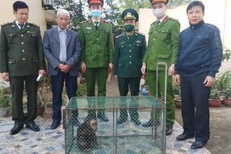 Vườn quốc gia Phong Nha – Kẻ Bàng tiếp nhận cứu hộ 12 động vật hoang dã